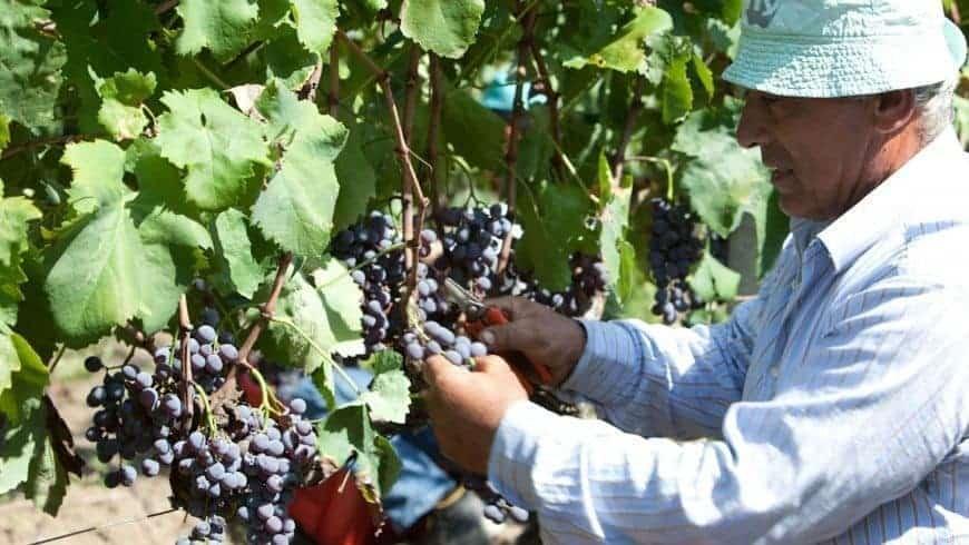 Le fasi del vino